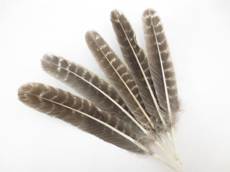 White Sage Smudge Feather Großhandel